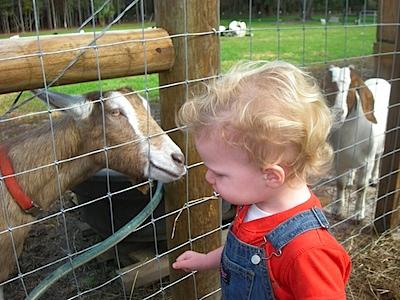 My goat!